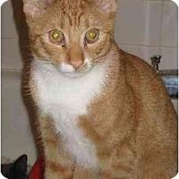 Adopt A Pet :: DAWSON (KL) - Little Falls, NJ