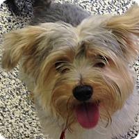 Adopt A Pet :: Niko - Washington, PA