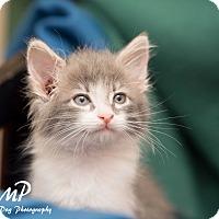 Adopt A Pet :: Sal - Fountain Hills, AZ