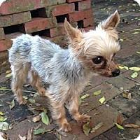 Adopt A Pet :: Ty - Leesburg, FL