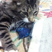 Adopt A Pet :: Shaggy - Trevose, PA