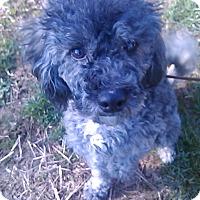 Adopt A Pet :: Rosebud - Cumberland, MD
