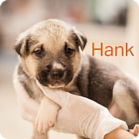 Adopt A Pet :: Hank - Dallas, TX