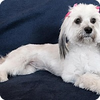 Adopt A Pet :: Sadie - Rancho Mirage, CA