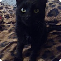 Adopt A Pet :: Ethan - Delmont, PA
