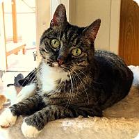 Adopt A Pet :: Sterling - Hartville, WY