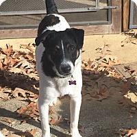 Adopt A Pet :: Turk (RS) - Harrisonburg, VA