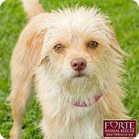 Adopt A Pet :: Pebbles - Marina del Rey, CA