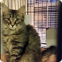 Adopt A Pet :: Fritz - Middletown, CT