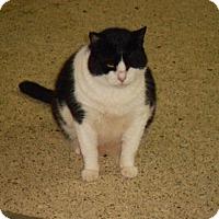 Adopt A Pet :: Louie - Bonita Springs, FL