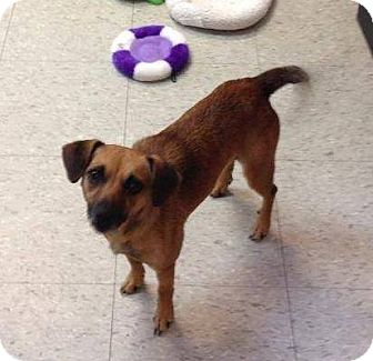 Chihuahua Mix Dog for adoption in Newport, Kentucky - Tae