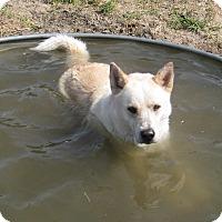 Adopt A Pet :: Charley - Columbus, NE