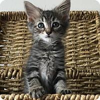 Adopt A Pet :: Arya - Great Mills, MD
