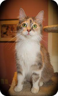 Domestic Mediumhair Cat for adoption in Hamilton, Ontario - Morgana