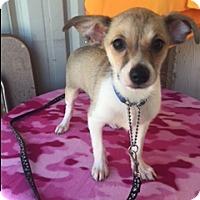 Adopt A Pet :: Zeno - Elk Grove, CA