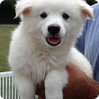 Adopt A Pet :: LOUIE - Wheeling, WV