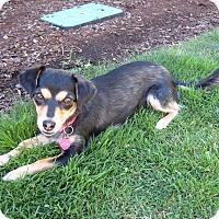 Adopt A Pet :: Joy - McKenna, WA