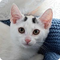 Adopt A Pet :: Possum - Bristol, CT