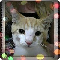 Adopt A Pet :: Freckles - Trevose, PA
