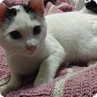 Adopt A Pet :: Willow - Harriman, NY, NY