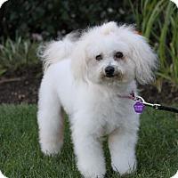 Adopt A Pet :: KATHLEEN - Newport Beach, CA
