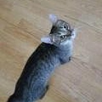 Adopt A Pet :: Bonnie - Shelbyville, KY