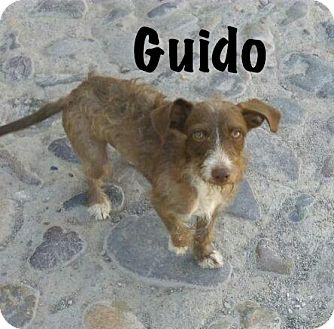 Terrier (Unknown Type, Small) Mix Dog for adoption in Vancouver, British Columbia - Guido