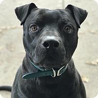 Adopt A Pet :: Sarge - Santa Clarita, CA