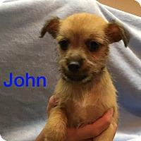 Adopt A Pet :: John - Glastonbury, CT