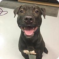Adopt A Pet :: Keno - Adrian, MI