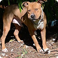 Adopt A Pet :: Duke - Miami, FL