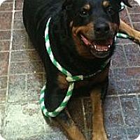 Adopt A Pet :: Bertha - St. Petersburg, FL