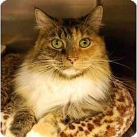 Adopt A Pet :: Annie - Modesto, CA