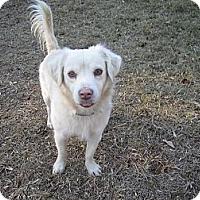 Adopt A Pet :: Fenway - Alexandria, VA