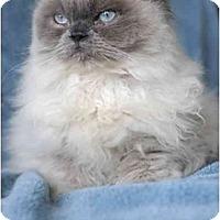 Adopt A Pet :: Kona - Columbus, OH