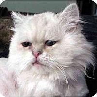 Adopt A Pet :: Taylor - Davis, CA