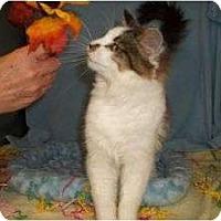Adopt A Pet :: Wynonna - McDonough, GA