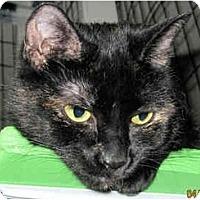 Adopt A Pet :: Maddie - Catasauqua, PA