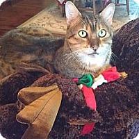Adopt A Pet :: Jabari - Davis, CA