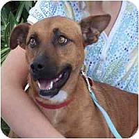 Adopt A Pet :: Bebe - Phoenix, AZ