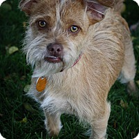 Adopt A Pet :: Mali - Broomfield, CO