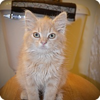 Adopt A Pet :: Danny - Xenia, OH
