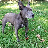 Adopt A Pet :: Pearl - Blue Ridge, GA