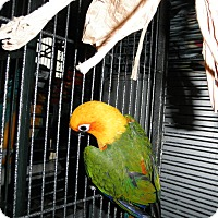 Adopt A Pet :: Tango - Neenah, WI