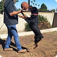 Adopt A Pet :: Rocky - Rancho Cucamonga, CA