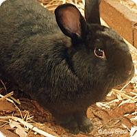 Adopt A Pet :: Justin - Santa Barbara, CA