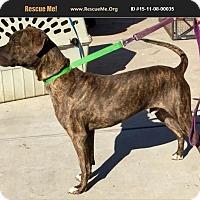 Adopt A Pet :: Luther - Phoenix, AZ