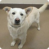 Adopt A Pet :: Buck - Las Vegas, NV