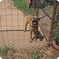Adopt A Pet :: Charlotte - Buchanan Dam, TX