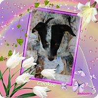 Adopt A Pet :: Cookie - Crowley, LA